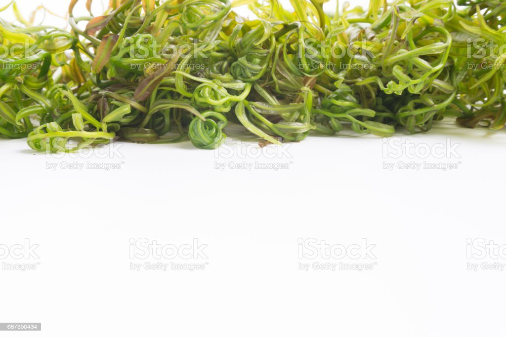 Midin (Stenochlaena palustris) is the popular wild vegetable of Sarawak on white background. stock photo