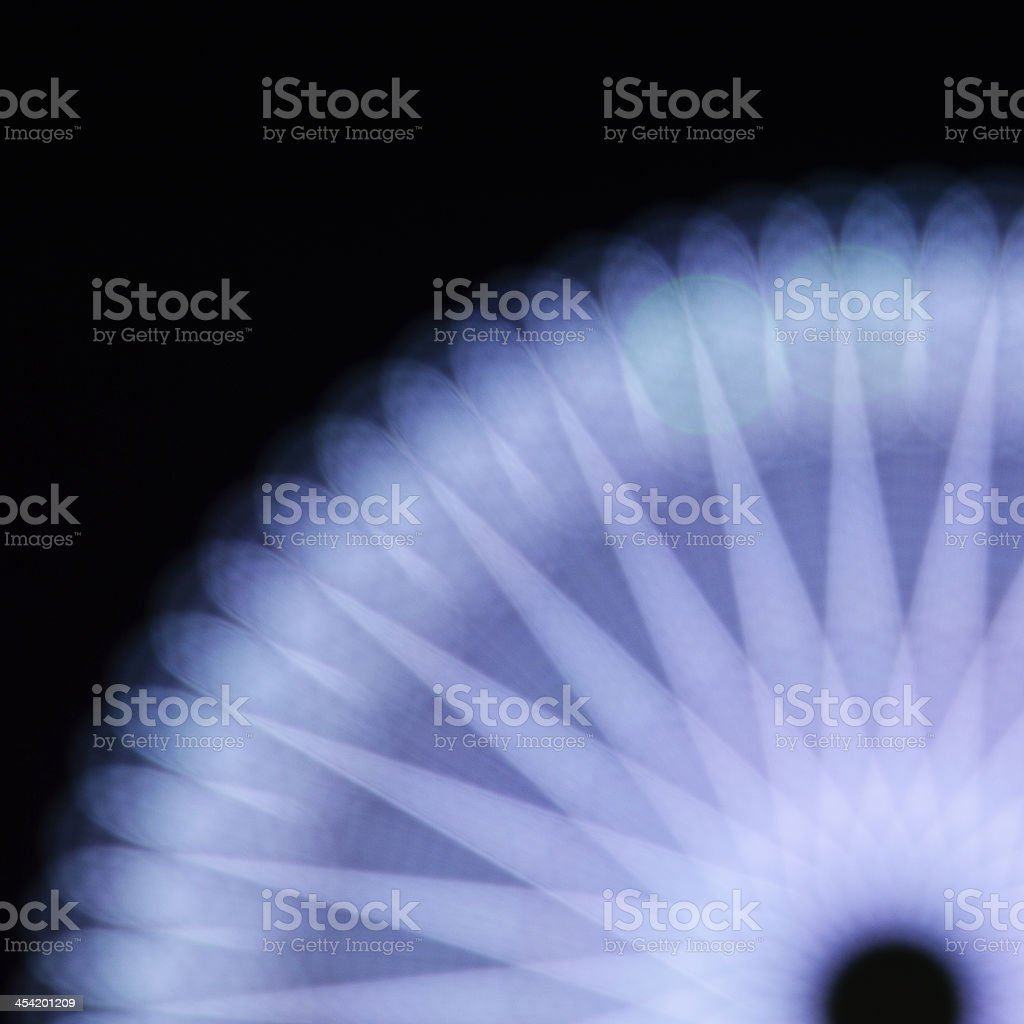Midnight flower-White royalty-free stock photo