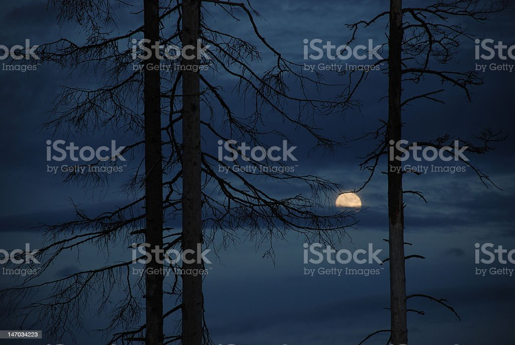 Midnight Hour royalty-free stock photo