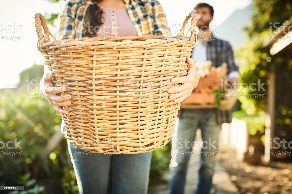 Midsection of female carrying wicker basket at organic farm stock photo
