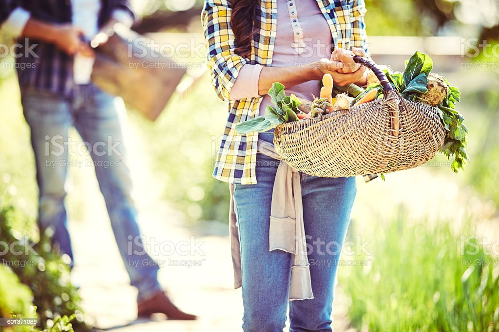 Midsection of woman carrying vegetable basket at farm stock photo