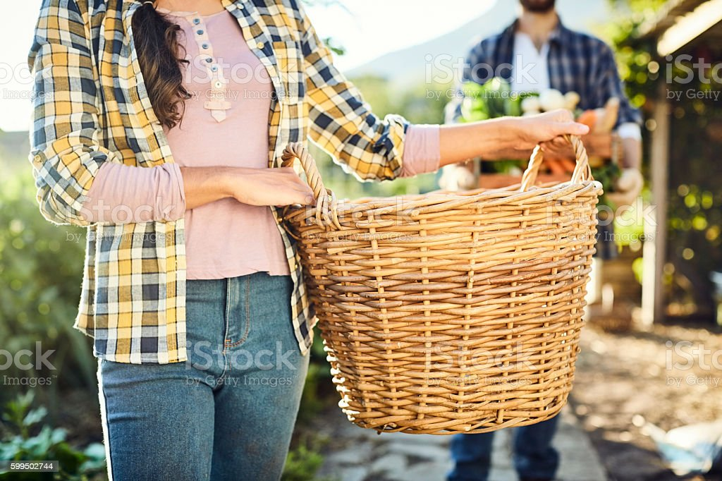 Midsection of woman carrying wicker basket at farm stock photo