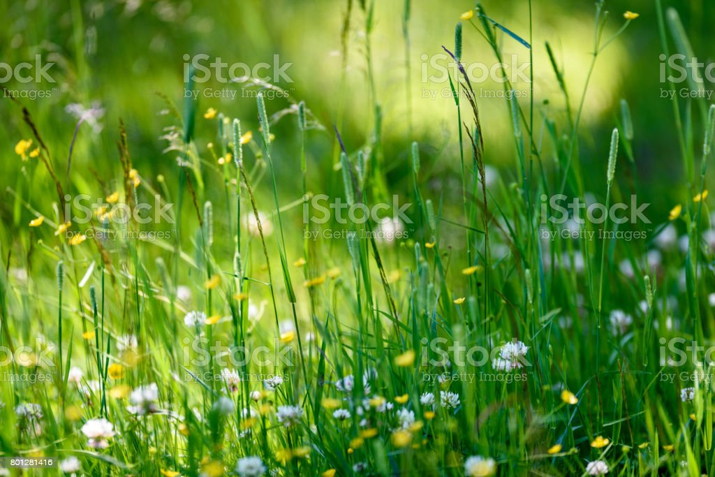 midsummer countryside meadow with flowers stock photo