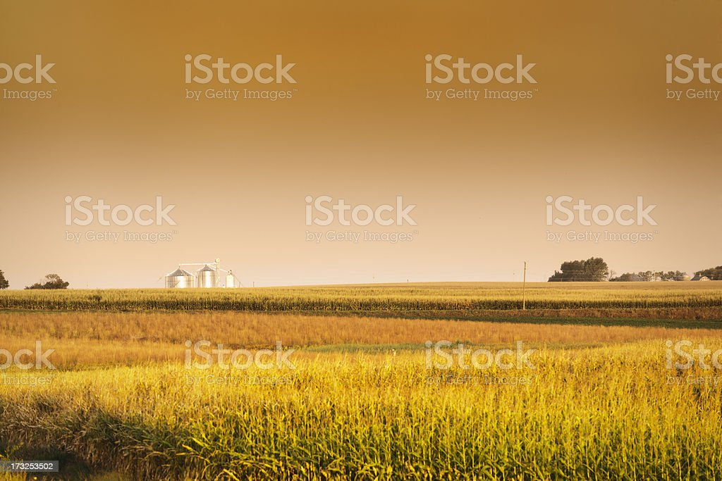 Midwest Corn Field and Grain Bin Silo at Harvest stock photo