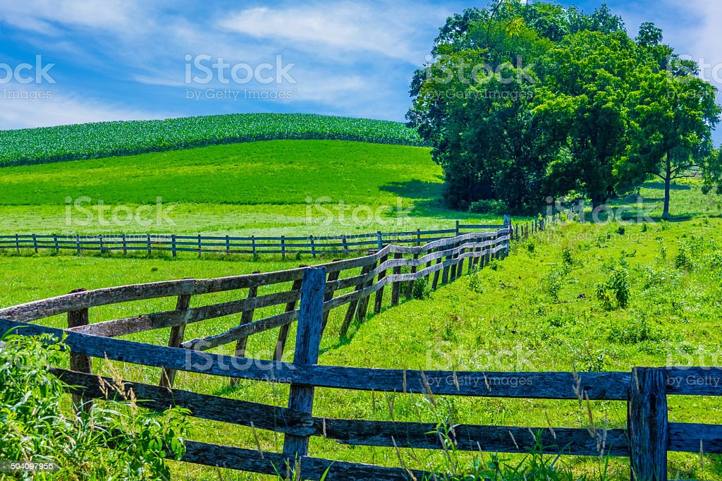 Midwest countyside with young corn crop field,USA(P) stock photo