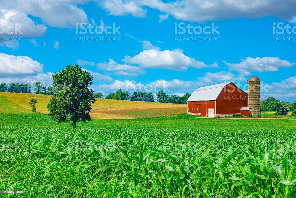 Midwest farm with spring corn crop and red barn,USA stock photo