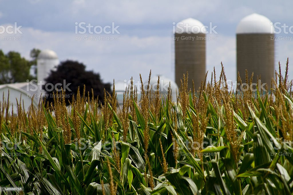 Midwest Field and Farm royalty-free stock photo