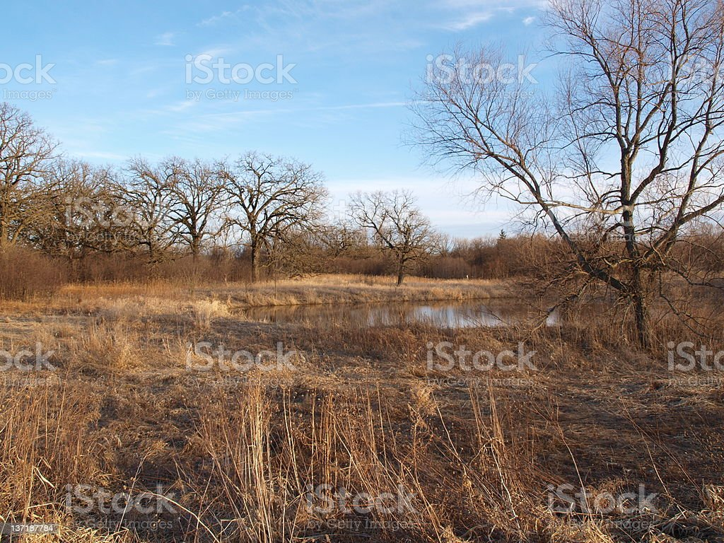 Midwest landscape with pond royalty-free stock photo