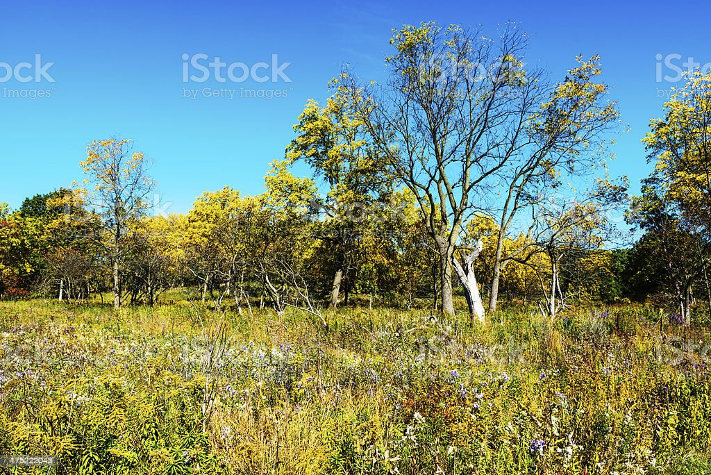 Midwest Prairie Wildflowers and Autumn Trees stock photo