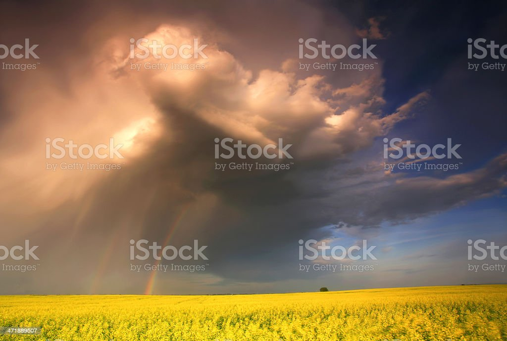 Midwest Thunderstorm Over Canola Field royalty-free stock photo