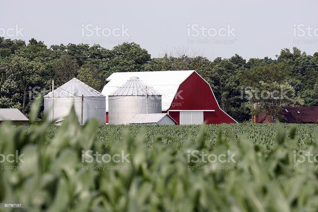 Midwestern corn farm stock photo