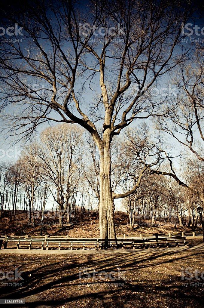 mighty tree stock photo