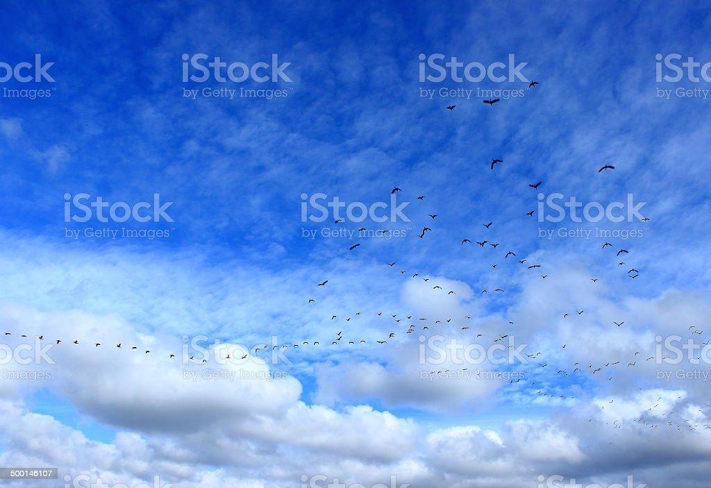 migracion stock photo