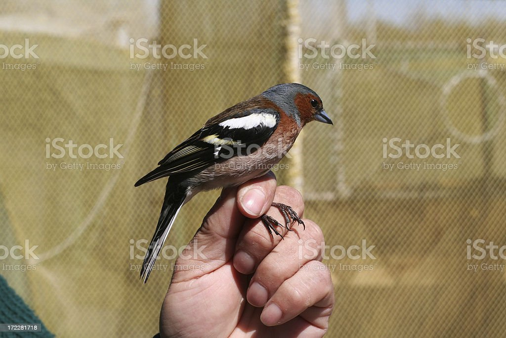 migrant bird royalty-free stock photo