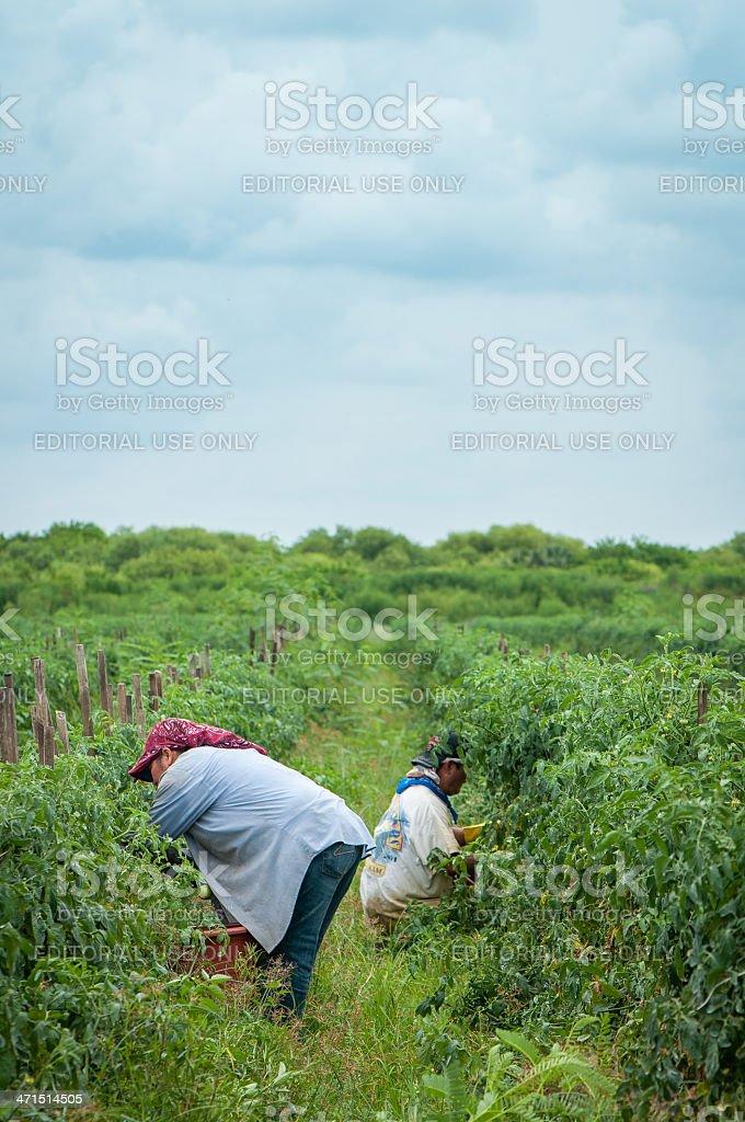 Migrant Labor stock photo