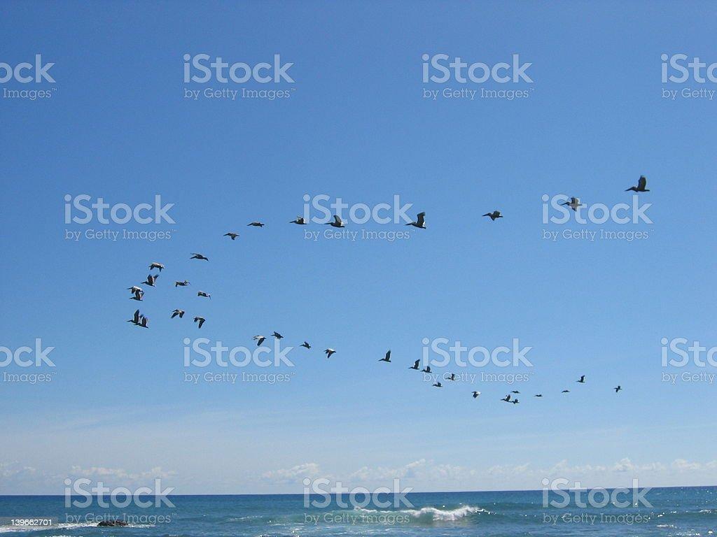 Migrating birds stock photo