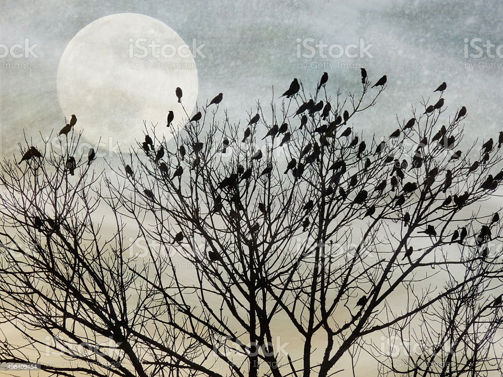 Migrating Birds Resting on Bare Trees Against a Twilight Sky stock photo