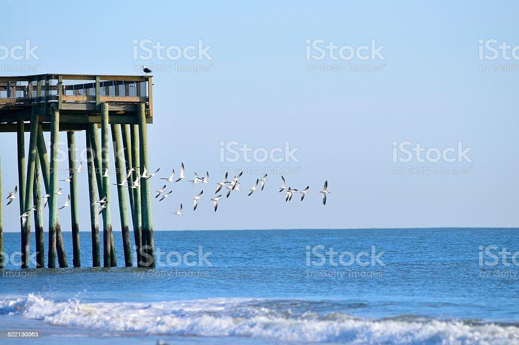 Migrating Black Skimmer Flock and Fishing Pier stock photo