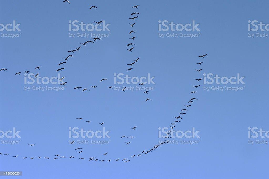 Migration of Crane birds royalty-free stock photo