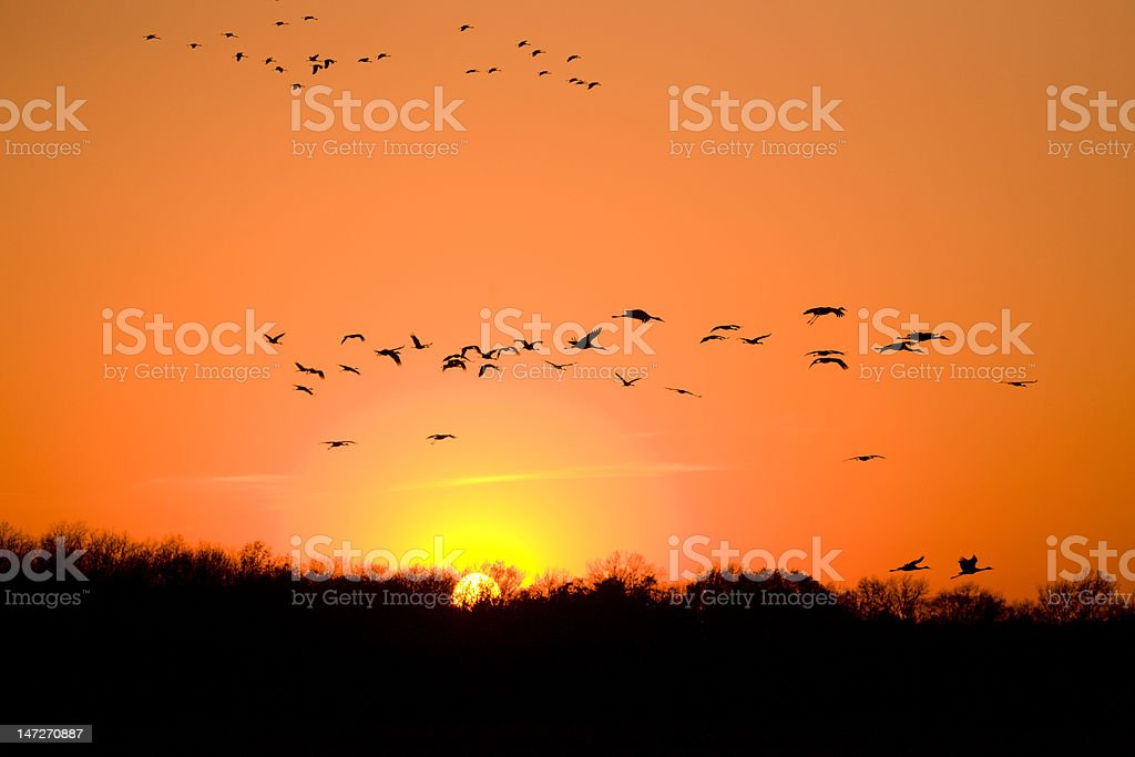 Migration royalty-free stock photo