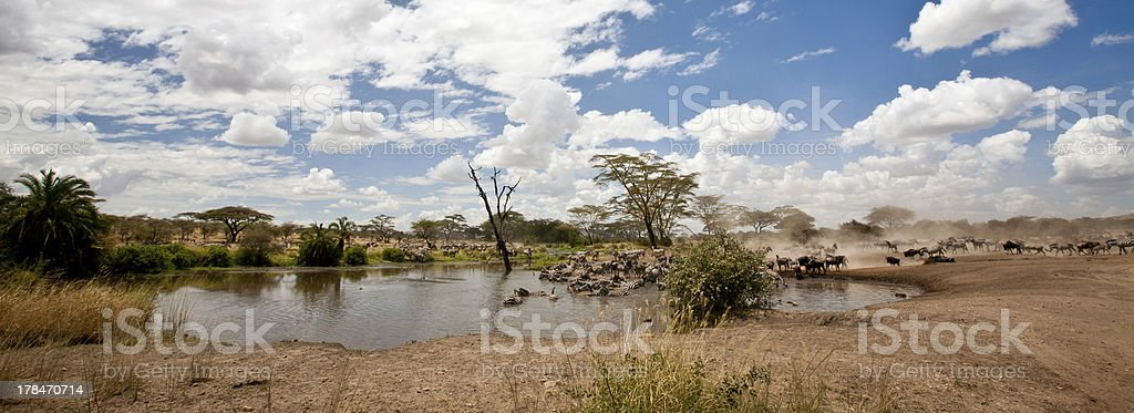 Migration Watering Hole stock photo