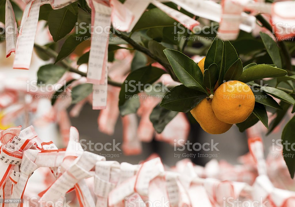 Mikan and Fortune Slips stock photo