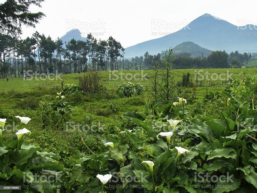 Mikeno and Karisimbi Volcanoes and Cinder Cone Mugongo Rwanda stock photo