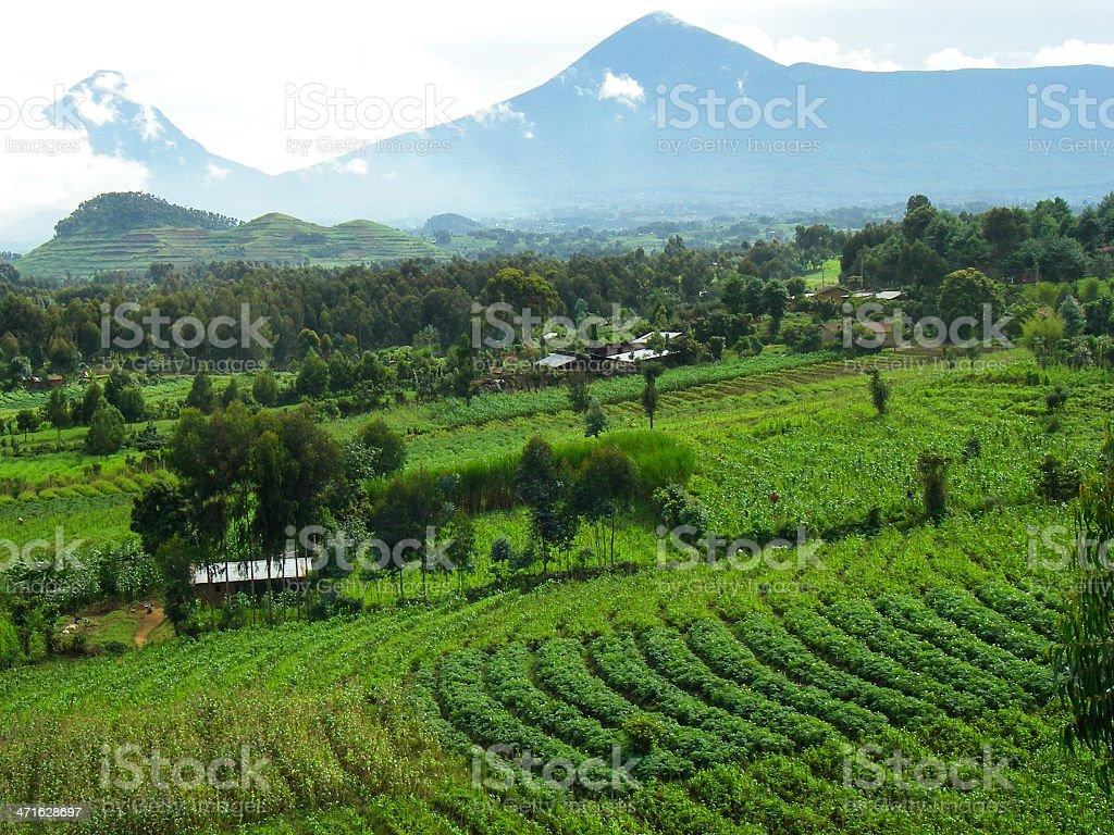 Mikeno Karisimbi Peaks and Farmland Virunga Mountains Rwanda Central Africa stock photo