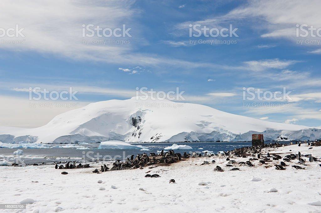 Mikklesen Harbour and penguins stock photo