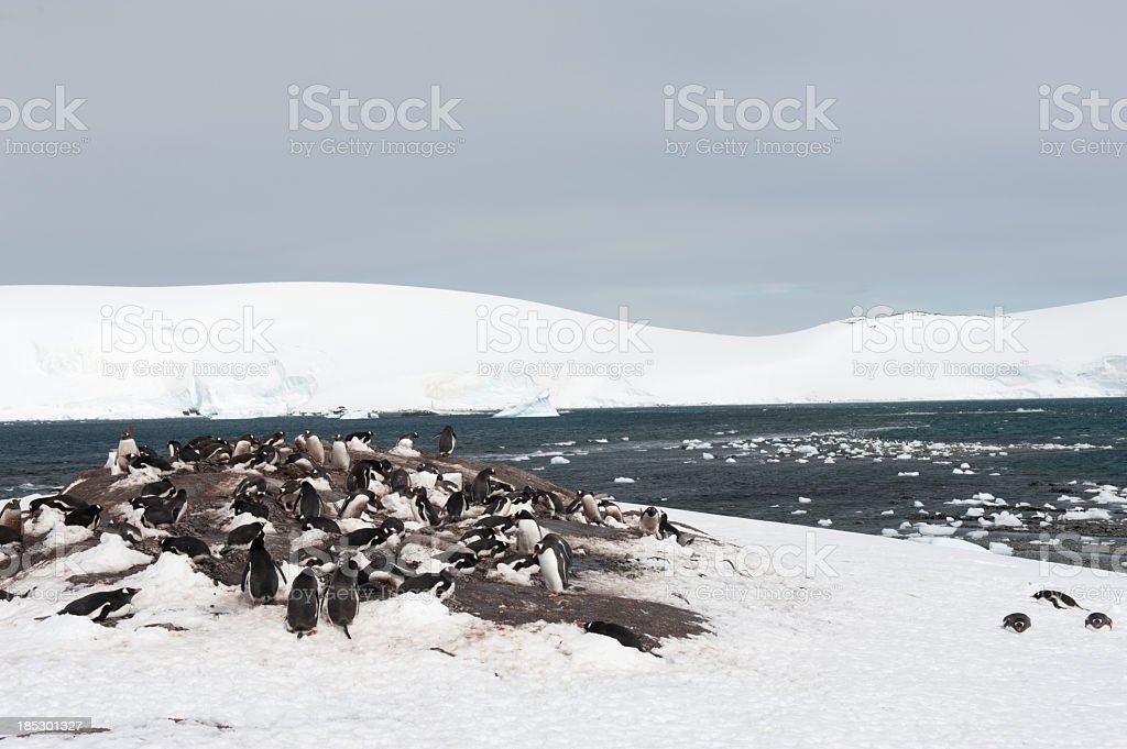Mikklesen Harbour with penguins stock photo