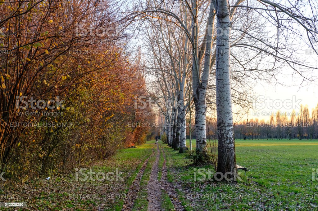 Milan (Italy): autumn in the Parco Nord stock photo