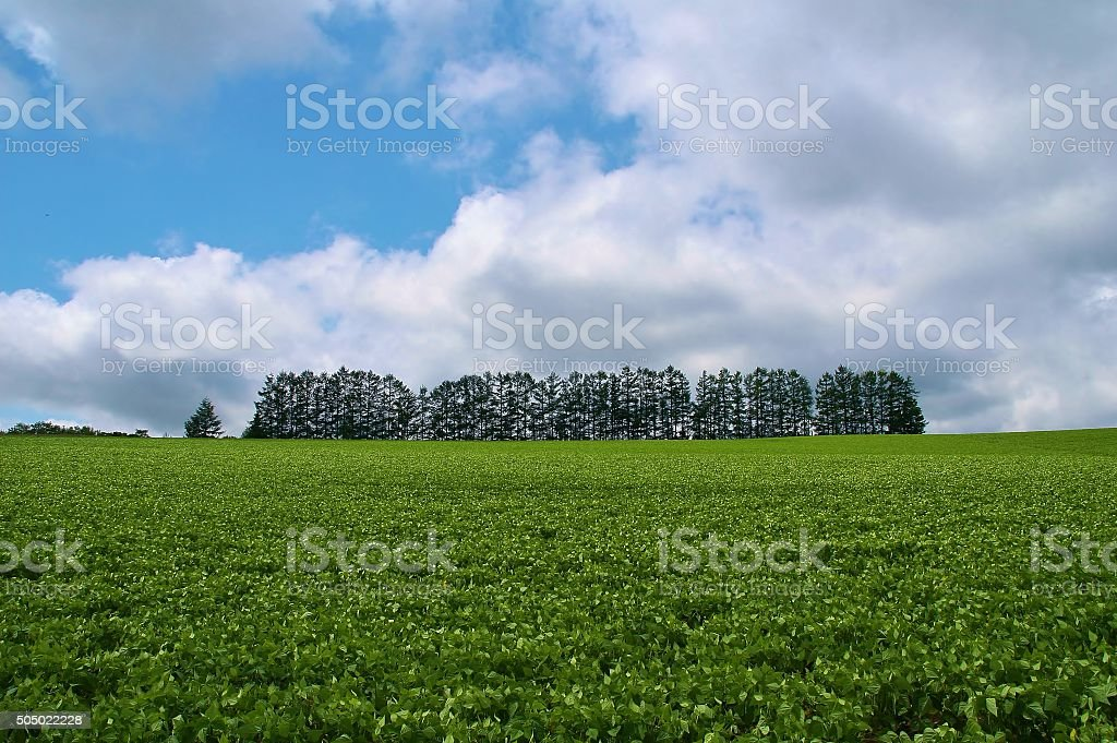 Mild Seven Hill stock photo
