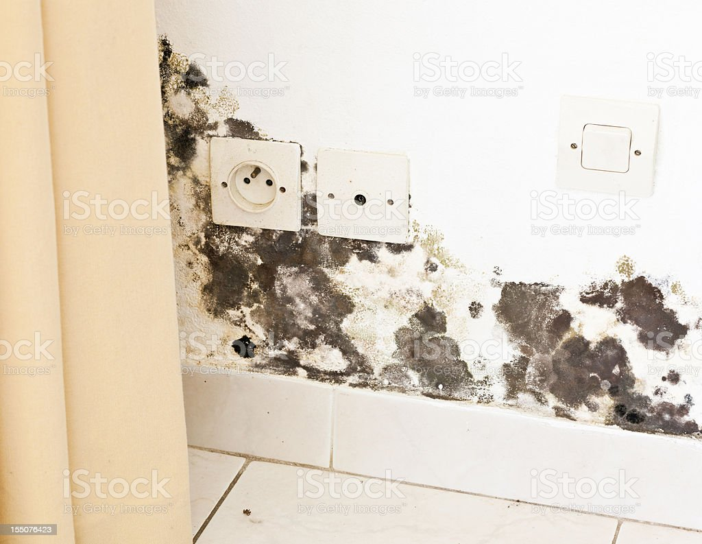 Mildew and Black Mold on Wall with Sockets behind Curtains royalty-free stock photo