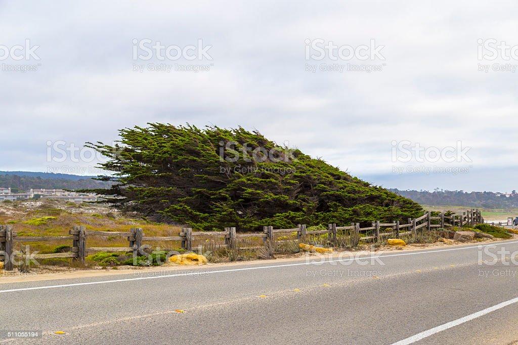 17 mile drive landscape at pacific coast, Monterey, California stock photo