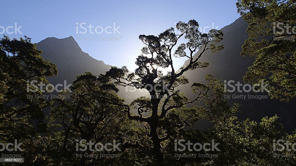 Milford Track, Rainforest, Fiordland, New Zealand stock photo