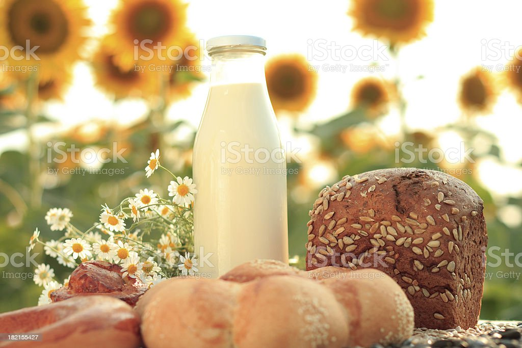 Milk and bread on sunflower field royalty-free stock photo
