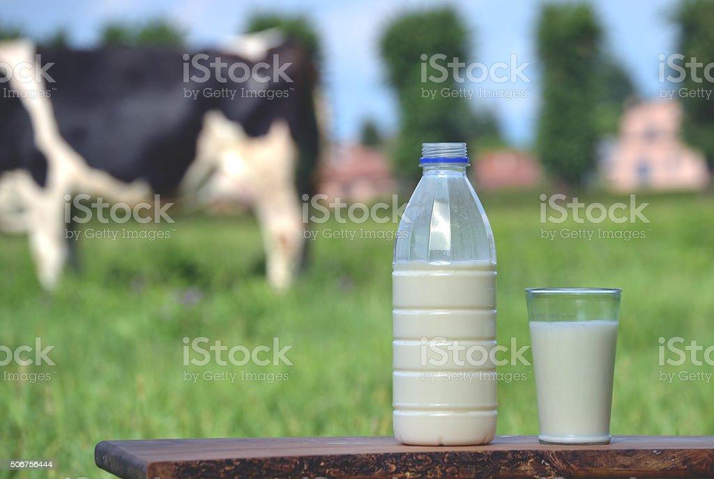 Milk and cow. stock photo