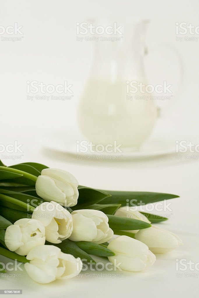milk and tulips royalty-free stock photo