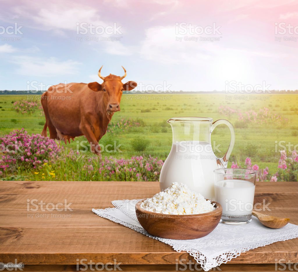 Milk jug and cottage cheese on meadow with cow background stock photo