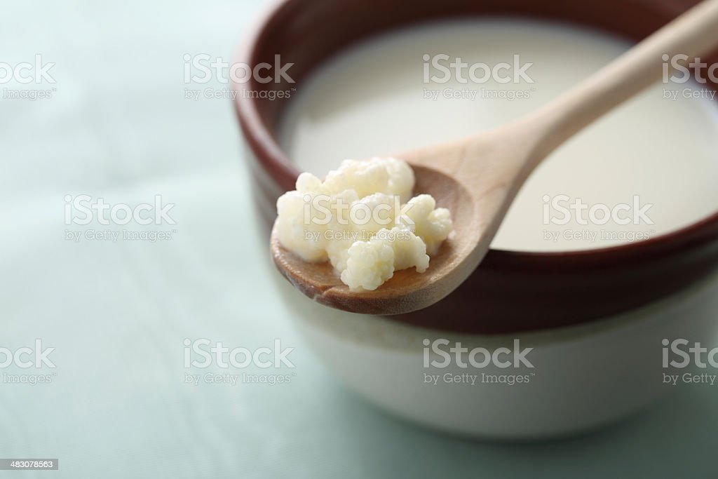 Milk Kefir Grains stock photo