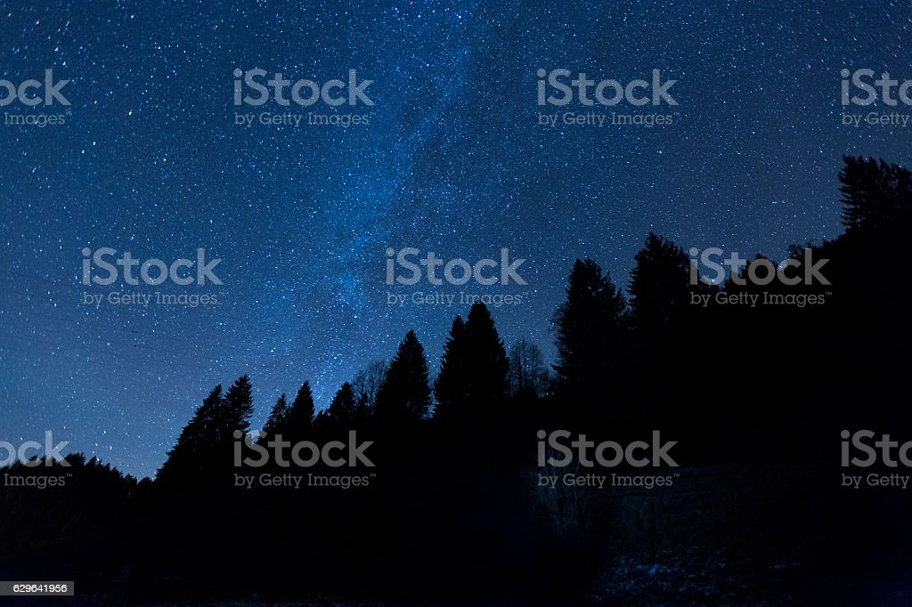 Milk Way Forest stock photo