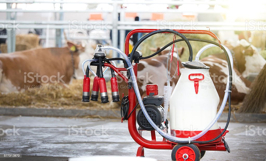 Milking machine in front of cows stock photo