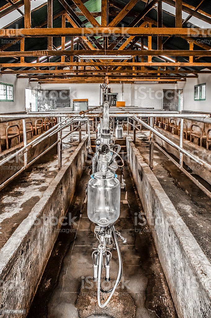 Milking Parlour stock photo