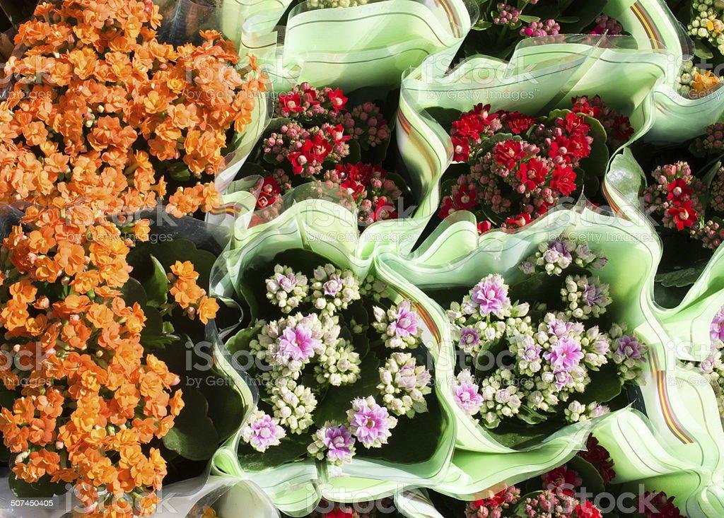 Milkweed on the flower market stock photo