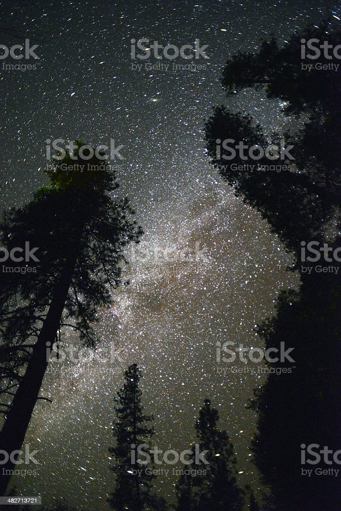 Milky Way and Conifers stock photo