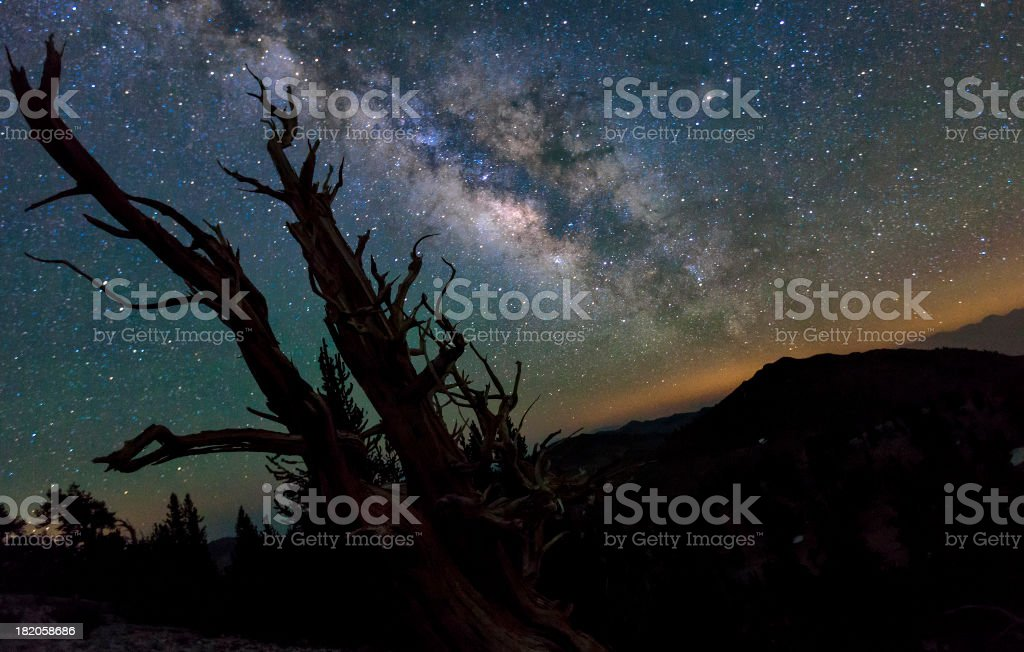 Milky Way and Night Sky Above an Ancient Tree stock photo