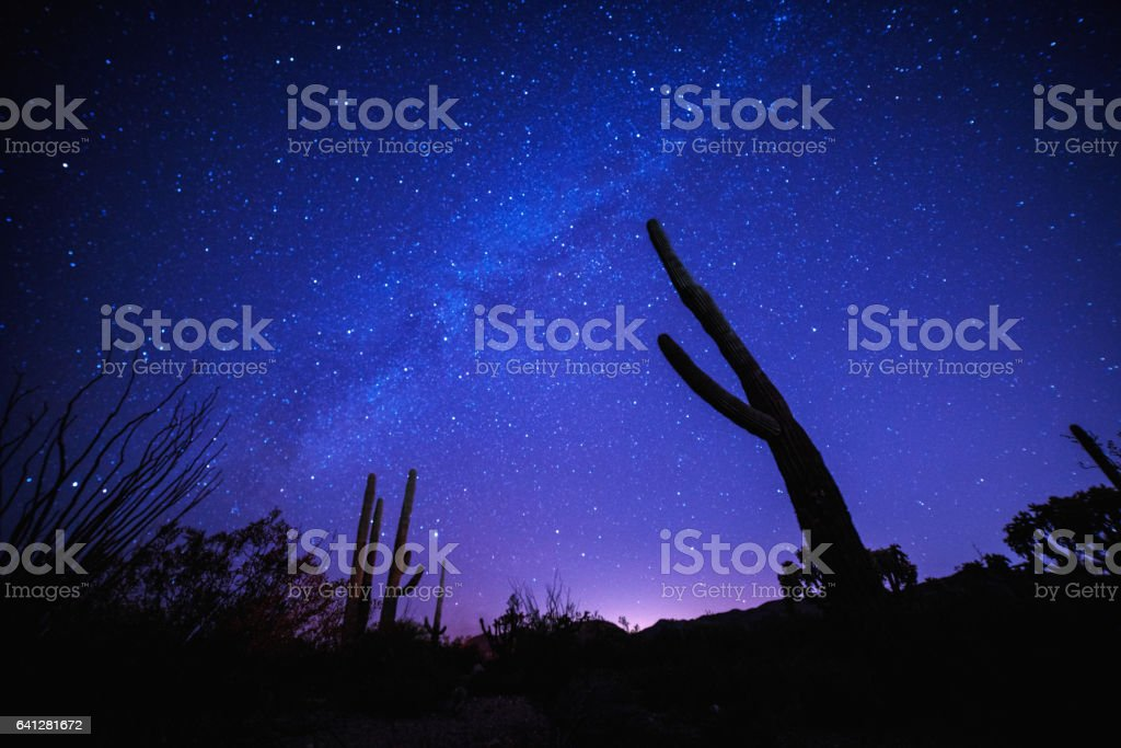 Milky way behind the silhouette of a cactus stock photo