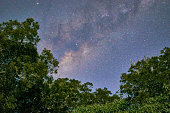 Milky way center In the jungle