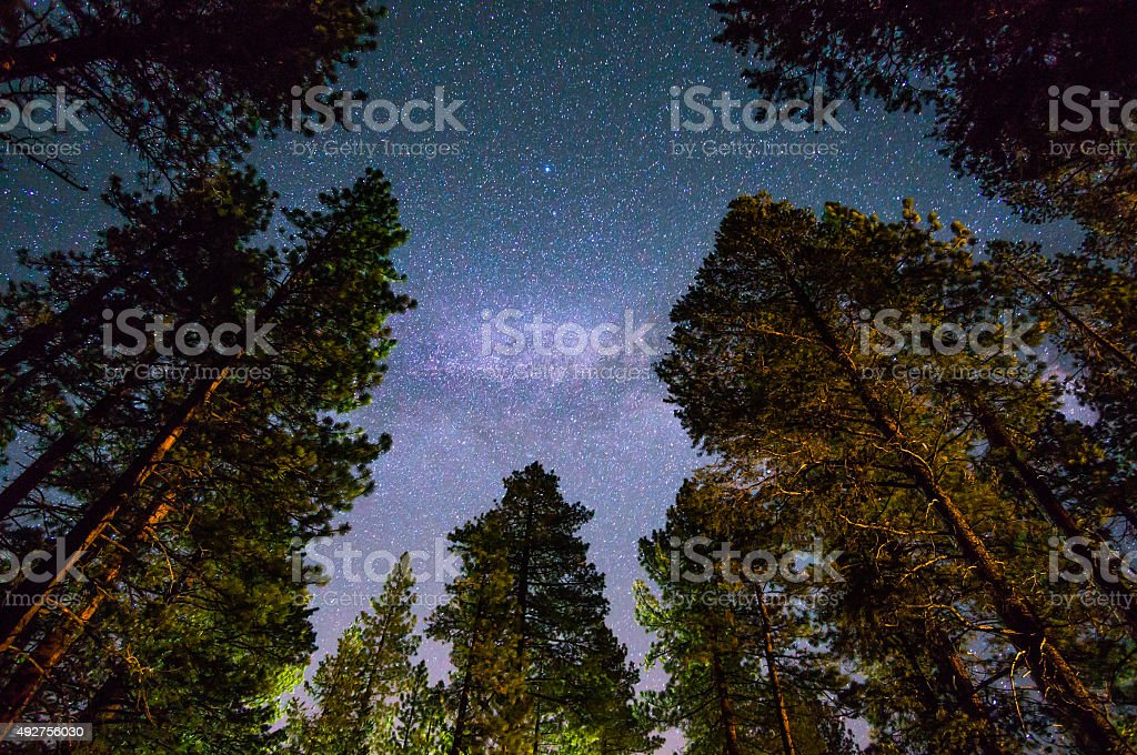 Milky way over a redwood forest stock photo