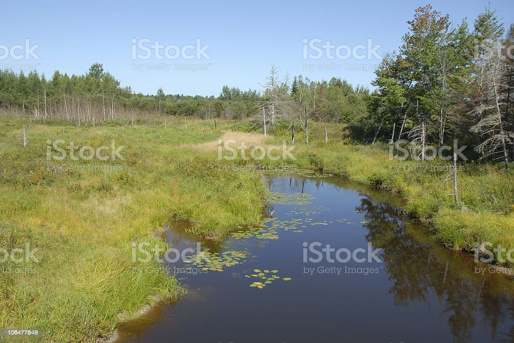 Mill River flows through marsh in coastal Maine stock photo